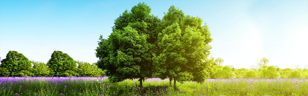A három fa legendája
